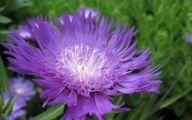 Photos Of Purple Flowers 21 Free Hd Wallpaper