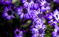 Photos Of Purple Flowers 22 Cool Hd Wallpaper