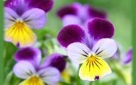 Photos Of Purple Flowers 25 High Resolution Wallpaper