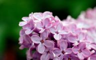 Photos Of Purple Flowers 27 High Resolution Wallpaper
