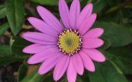 Photos Of Purple Flowers 29 Cool Hd Wallpaper