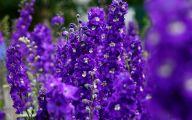 Photos Of Purple Flowers 3 Desktop Wallpaper