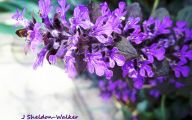 Photos Of Purple Flowers 35 Cool Hd Wallpaper