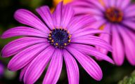 Photos Of Purple Flowers 36 Background Wallpaper