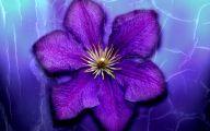 Photos Of Purple Flowers 8 Hd Wallpaper
