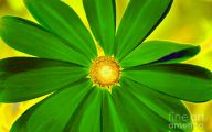 Pictures Of Green Flowers 10 Hd Wallpaper