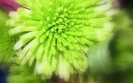 Pictures Of Green Flowers 18 Desktop Background