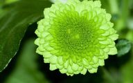 Pictures Of Green Flowers 2 Wide Wallpaper
