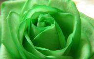 Pictures Of Green Flowers 3 Desktop Wallpaper