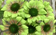 Pictures Of Green Flowers 33 Cool Hd Wallpaper