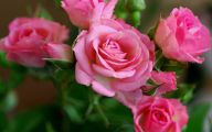 Pink Flowers 111 Background