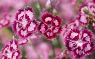 Pink Flowers 114 Desktop Background