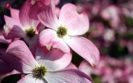 Pink Flowers 129 Desktop Background