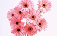 Pink Flowers 154 Cool Hd Wallpaper