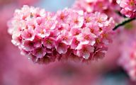Pink Flowers 160 Free Wallpaper