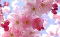 Pink Flowers 167 Cool Wallpaper