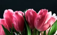 Pink Flowers Meaning 1 Hd Wallpaper