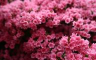 Pink Flowers Meaning 25 High Resolution Wallpaper