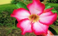 Pink Flowers Names And Picture 24 Free Wallpaper