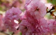 Pink Flowers Names And Picture 3 Background