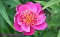 Pink Flowers Types 10 Cool Hd Wallpaper