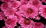 Pink Flowers Types 16 Wide Wallpaper