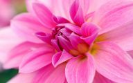 Pink Flowers Types 18 Background Wallpaper
