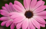 Pink Flowers Types 3 Desktop Background
