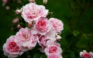 Pink Flowers Types 6 Background Wallpaper