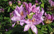 Purple Flowers 115 Desktop Wallpaper