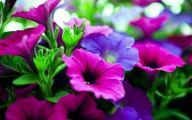 Purple Flowers 161 Cool Wallpaper