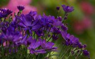 Purple Flowers 168 Free Wallpaper
