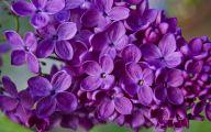 Purple Flowers For Weddings 30 Cool Hd Wallpaper