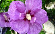 Purple Flowers For Weddings 36 Wide Wallpaper