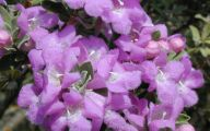 Purple Flowers In Texas 24 Widescreen Wallpaper