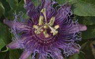 Purple Flowers In Texas 5 Desktop Wallpaper