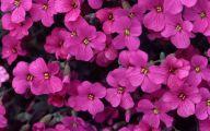 Purple Flowers List 11 Background