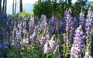 Purple Flowers List 17 Wide Wallpaper
