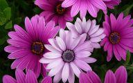 Purple Flowers List 19 Free Hd Wallpaper