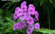Purple Flowers List 2 Background