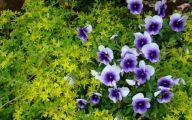 Purple Flowers List 20 Desktop Background