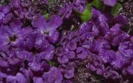 Purple Flowers List 21 Desktop Wallpaper