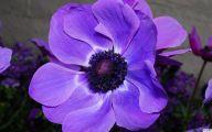 Purple Flowers List 22 Free Wallpaper