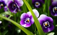 Purple Flowers List 23 High Resolution Wallpaper
