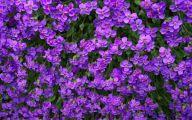 Purple Flowers List 27 Widescreen Wallpaper