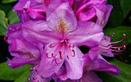 Purple Flowers List 4 Cool Hd Wallpaper
