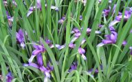 Purple Flowers List 6 Widescreen Wallpaper