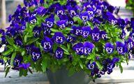 Purple Flowers List 9 Free Wallpaper
