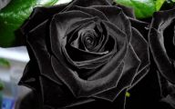 Real Black Flowers 15 Widescreen Wallpaper