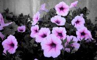 Real Black Flowers 8 Desktop Wallpaper